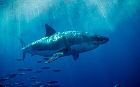 When Sharks Turned Up at Their Beach, They Called in Drones
