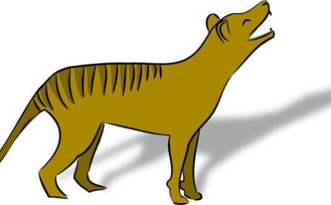 First Ever Video of a Tasmanian Tiger Cub Has Been Released