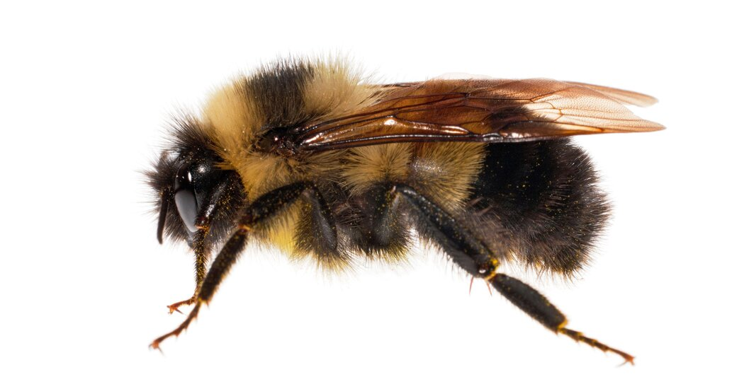How You Can Help Count and Conserve Native Bees