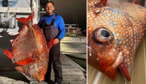Huge tropical fish caught off the coast of Virginia