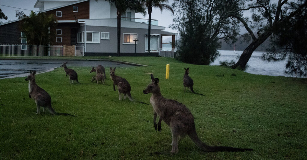 Kangaroos Can Communicate With Humans, Study Says