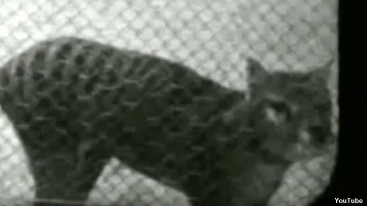 Only-Known Footage of Juvenile Tasmanian Tiger Unearthed – Coast to Coast AM