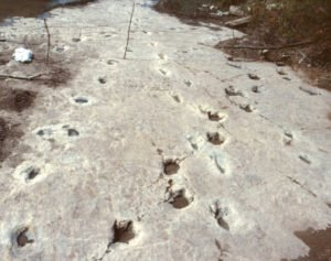 Paluxy River Tracks: Could Humans and Dinosaurs Coexist?
