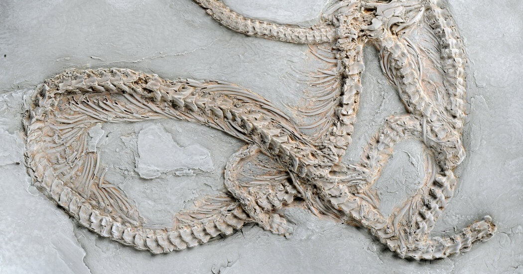Pythons Slithered Through Europe Before Coiling Around the World