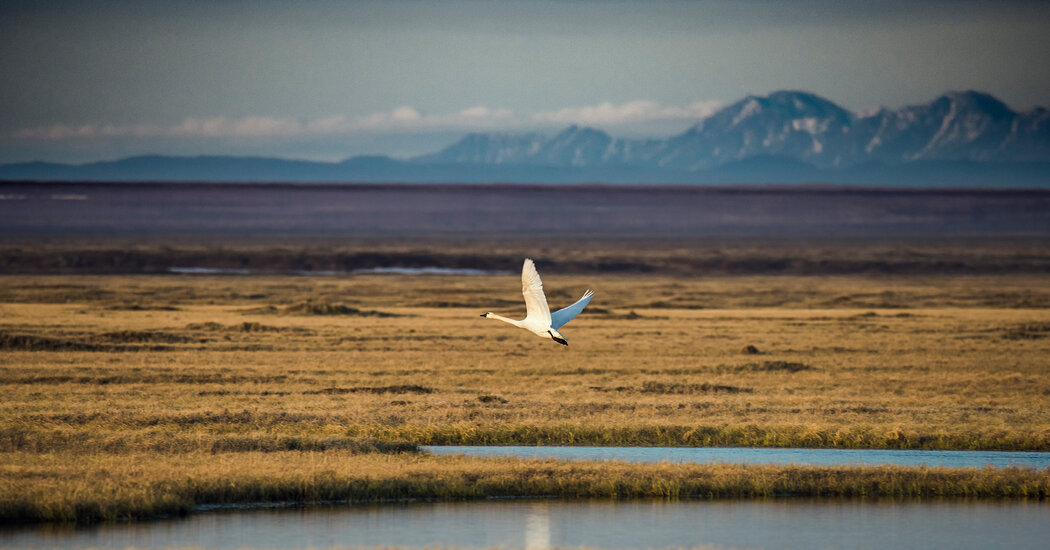 Sale of Arctic Refuge Oil and Gas Leases Is Set for Early January