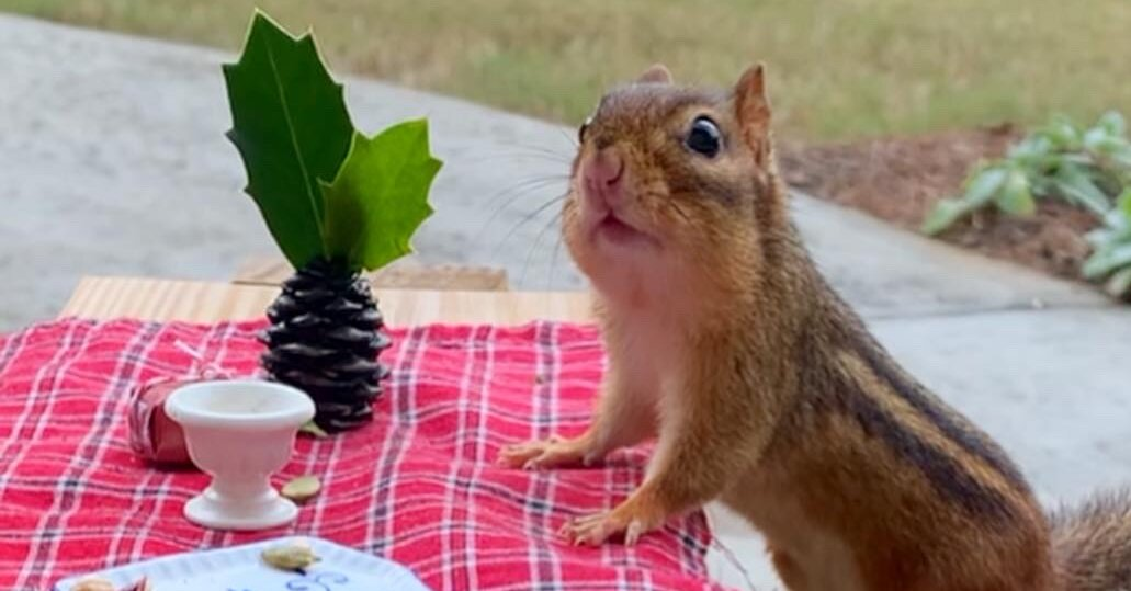 Squirrel Tables Are the New Bird Feeders