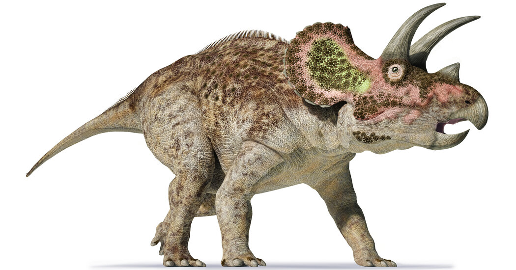 Another Thing a Triceratops Shares With an Elephant