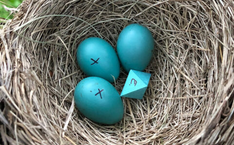 How an Eight-Sided 'Egg' Ended Up in a Robin's Nest