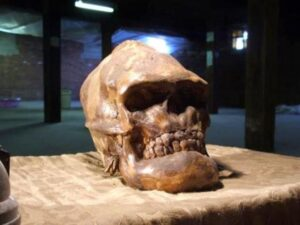 Lovelock Skull: Evidence of Ancient Giants of the Americas