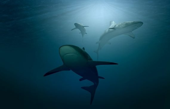 One of the Largest Sharks From the Jurassic Period Unearthed in Bavaria