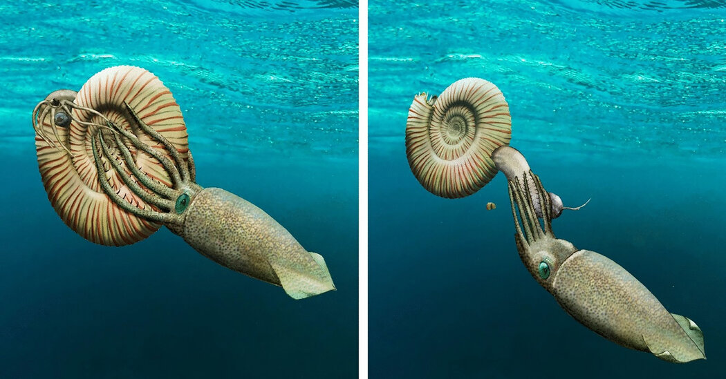 This Ammonite Was Fossilized Outside Its Shell