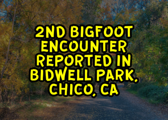 2nd Bigfoot Encounter Reported in Bidwell Park, Chico, CA – Phantoms and Monsters