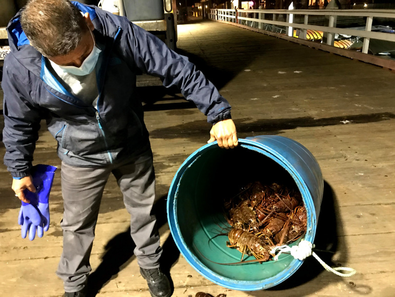 California lobster fishermen ride high-price wave from China