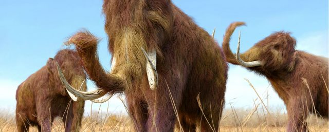 Creatures That May Have Lived Longer Than We Thought: The Mammoth, Part 2