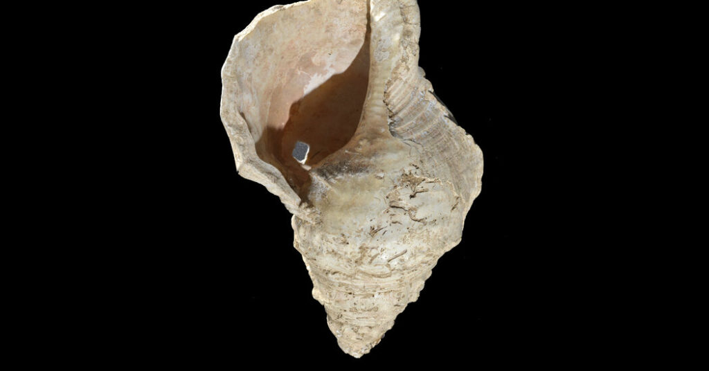 Hear the Sound of a Seashell Horn Found in an Ancient French Cave