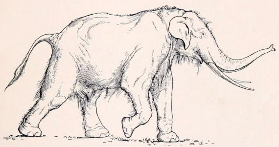 Massive Prehistoric Fossil Belonged to a Straight-Tusked Elephant or Mammoth