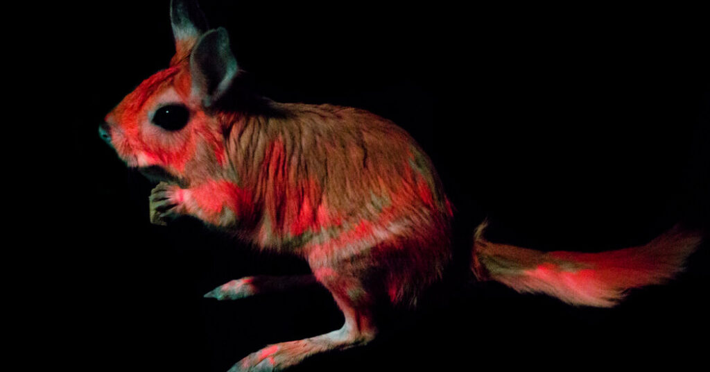 Meet the Newest Member of the Fluorescent Mammal Club