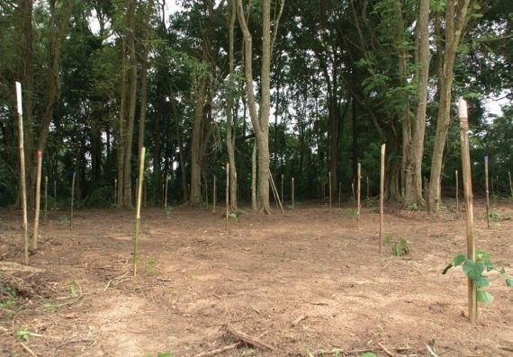 The Grim Tale of the Ibadan Forest of Horrors