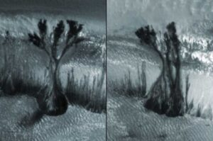 The Riddle of the Martian Trees: What Is Depicted in Strange Photos
