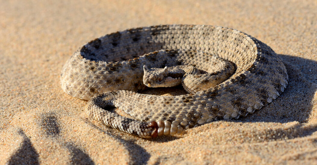 The Skin-Deep Physics of Sidewinder Snakes