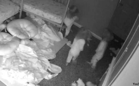 Toddlers Filmed Talking to Ghost? – Coast2Coast AM