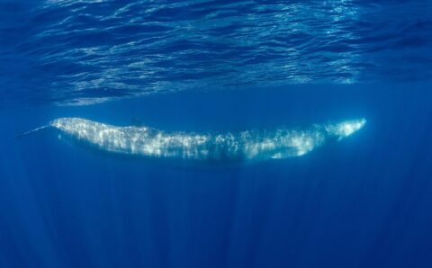 Whale Songs Could Reveal Deep Secrets Beneath the Oceans