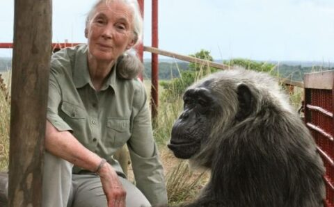 The Dark Story of the Gombe Chimpanzee War