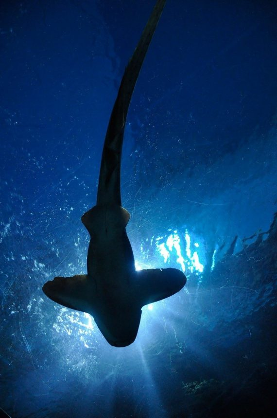 Three Glow-in-the-Dark Sharks Discovered Off the Coast of New Zealand