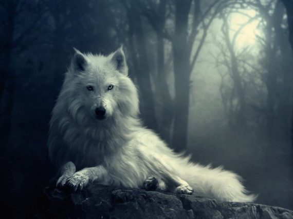 Wild Wolves on the Loose in England? Or Something Even Stranger?