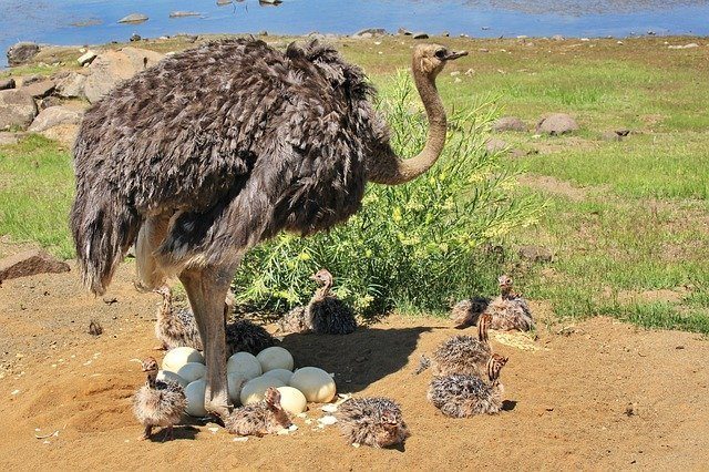 World's First Dinosaur Preserved Sitting on a Nest of Embryo-Filled Eggs Found