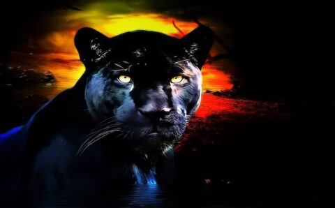 Alien Big Cat Shows Up on British News Show – Mysterious Universe
