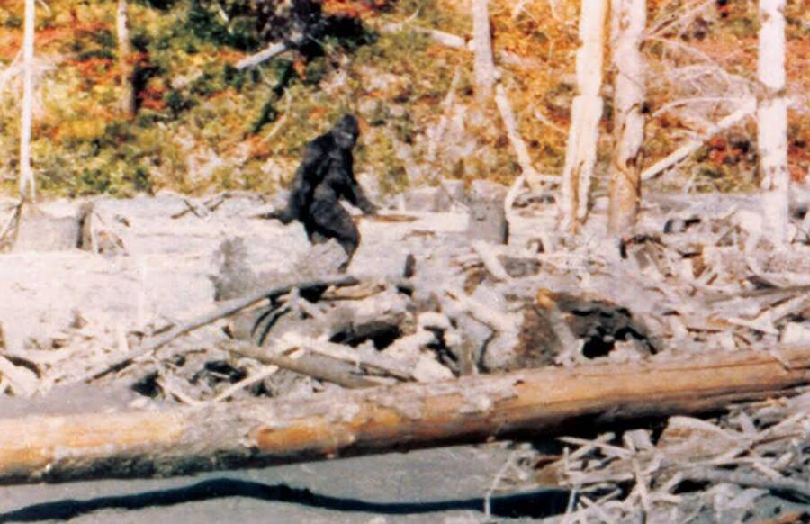 The Inside Story of the Grainy 59-Second Film That Immortalized Bigfoot – All That's Interesting