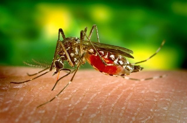 Bio-Engineered Mosquitoes Released in Florida and More Bio-Bugs are Coming
