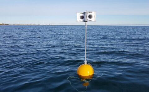 The Birds and the Buoys: Using Googly Eyes to Avert Extinction