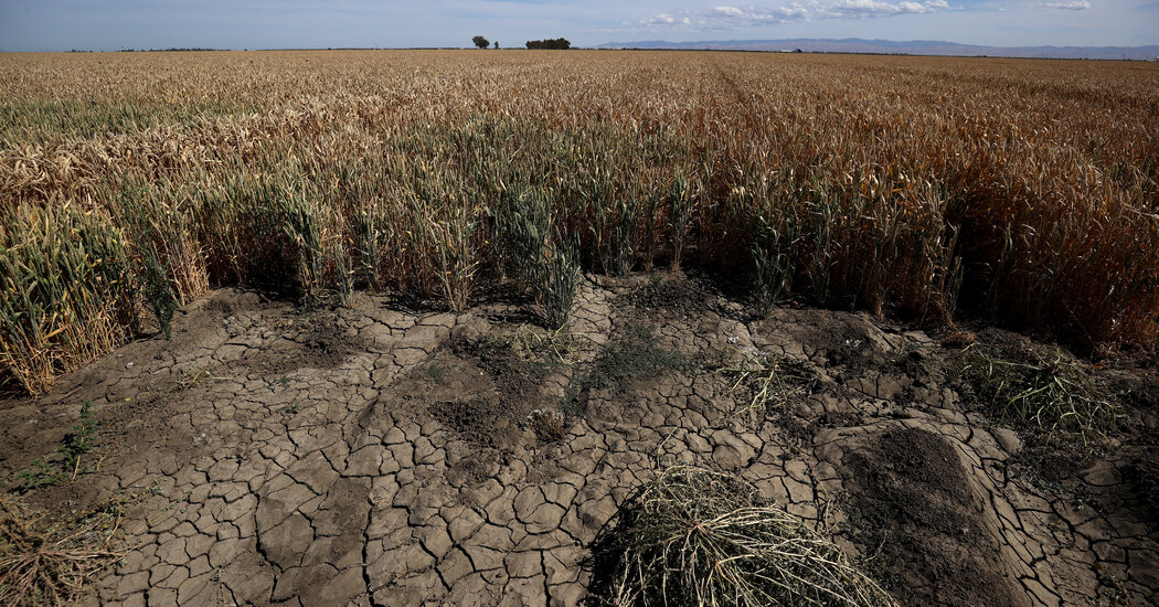Against Expectations, Southwestern Summers Are Getting Even Drier