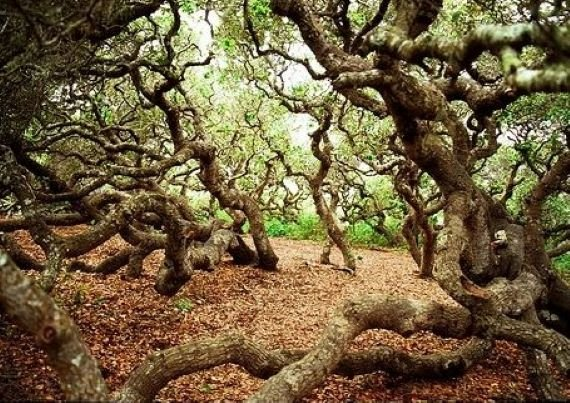 The Haunted Elfin Forest of San Diego County