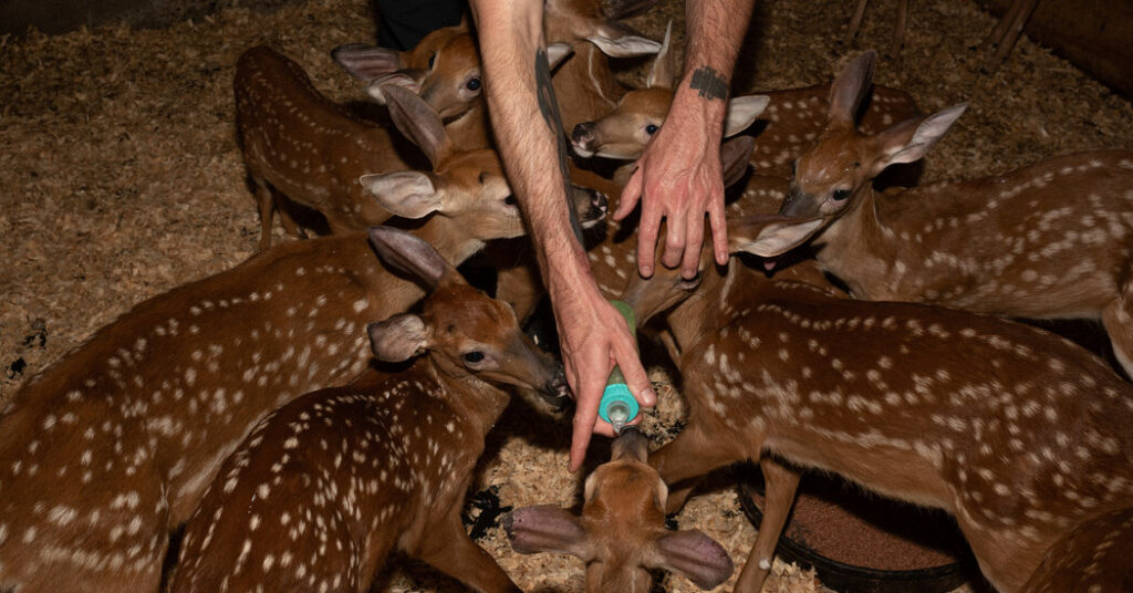 Caring for the Wildlife That Stray Into the Suburbs