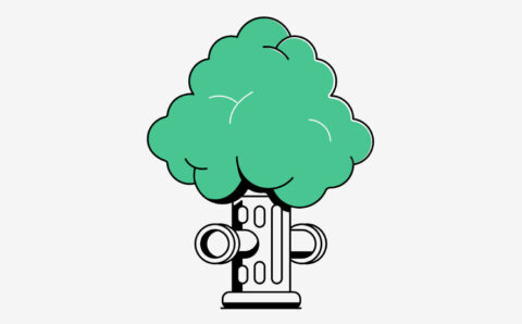 How to Plant a Street Tree