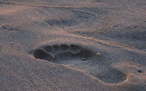 The 3.75 Million Years Old Laetoli Footprints – Who Made Them?