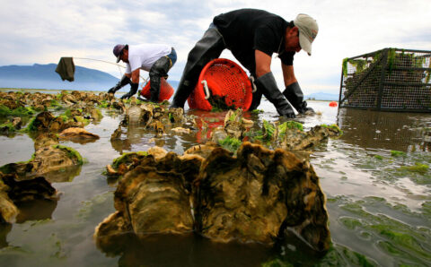 Washington Issues Warning Not to Eat Raw Shellfish After 'Heat Dome'