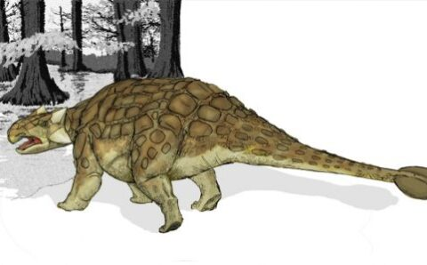 New Species of Spiked Armored Dinosaur is Unlike Anything Ever Found