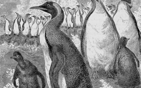 School Kids in New Zealand Discovered a New Giant Penguin Species