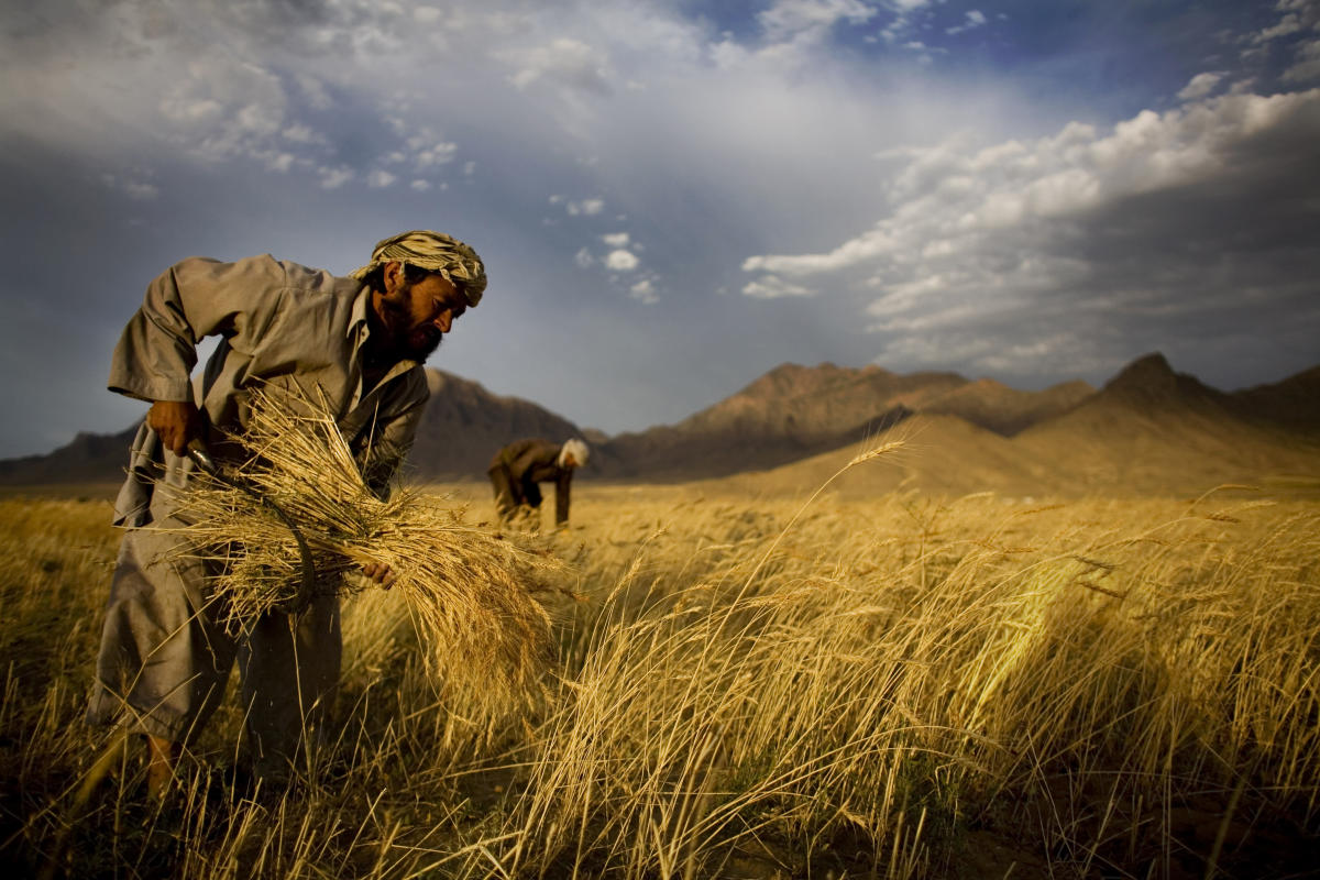 UN officials says rural Afghans have critical need for aid